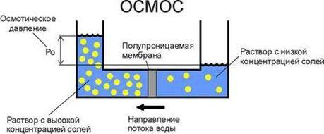 схема осмоса